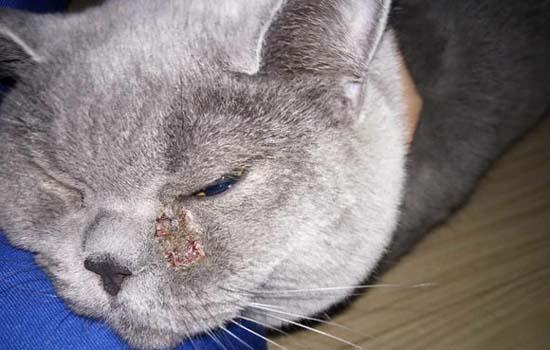 猫咪被烫之后会死吗
