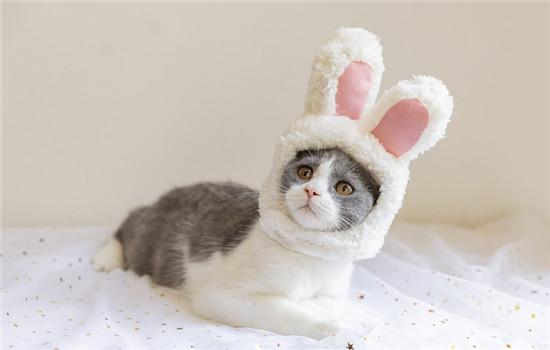 猫可不可以听懂人话