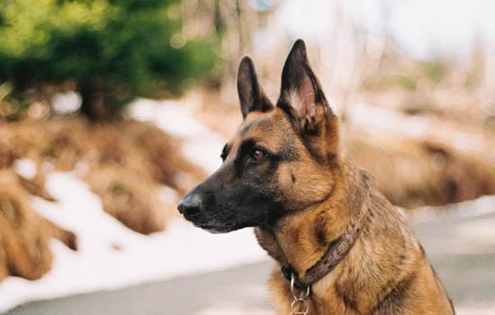 狗狗可不可以先打狂犬在打其他疫苗