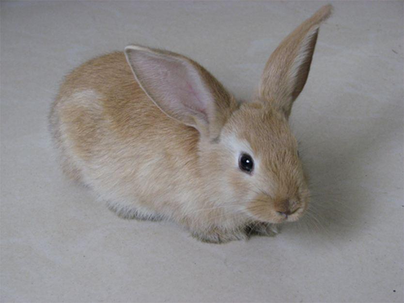 多瓦夫兔哪里买