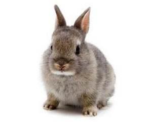 多瓦夫兔粘人吗