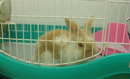 银狐兔那里卖 银狐兔哪里卖