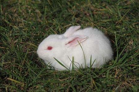 大耳白兔怎么拿起来