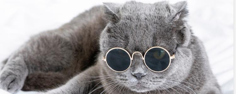 渐层猫为什么不能养