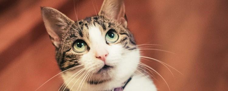 为什么猫这么爱舔毛呢