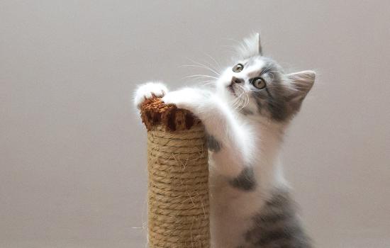 猫几个月绝育