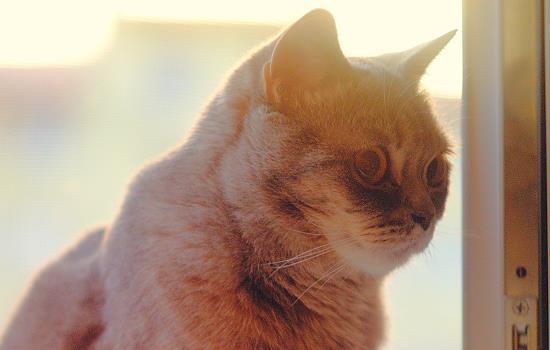 猫咪爬饭桌屡教不改