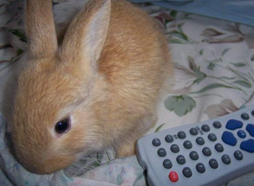 太行山兔饲养方法