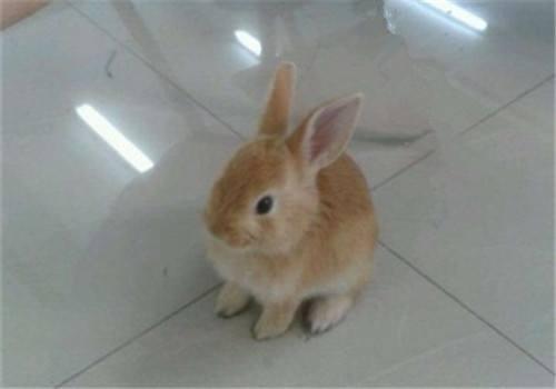 太行山兔寿命 太行山兔寿命多长