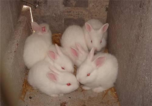 哈白兔几天不吃饲料为什么