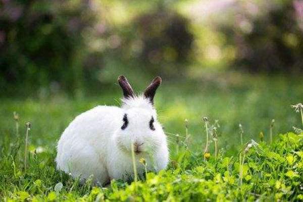哈尔滨大白兔价格