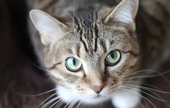 冬季猫怕冷吗多少度插图(1)