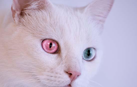 猫吐透明液体带泡沫不吃东西