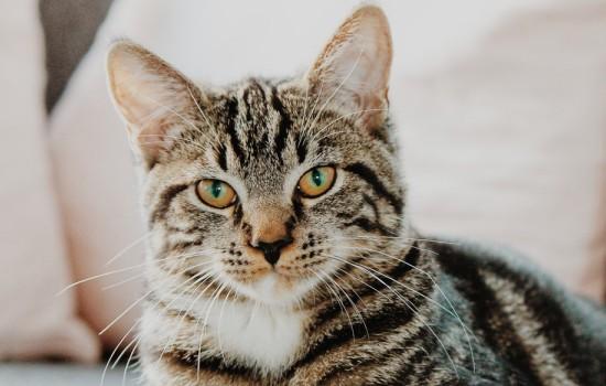 猫发出呼噜的声音代表什么