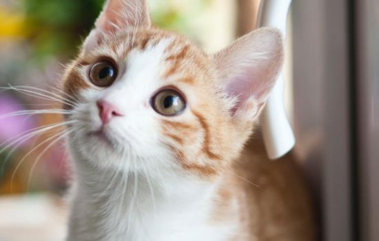 强制喂猫喝水技巧