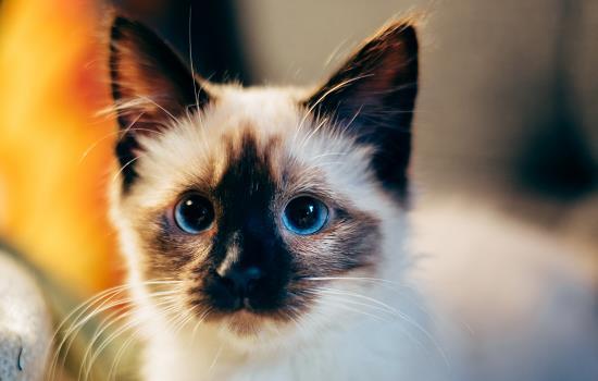 猫一到身边就打呼噜
