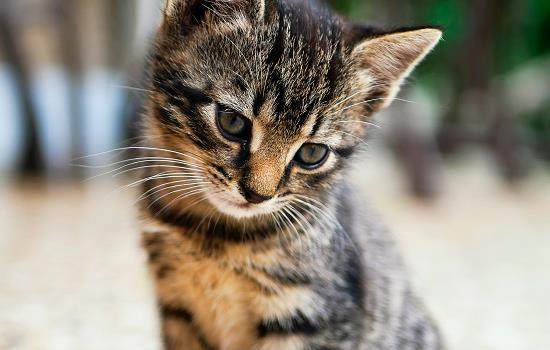 猫可以喝奶茶店的奶茶吗