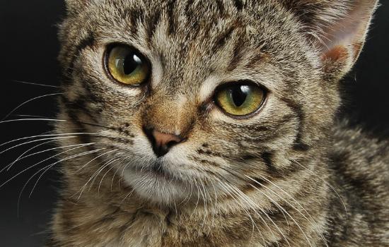 猫绝育后注意什么