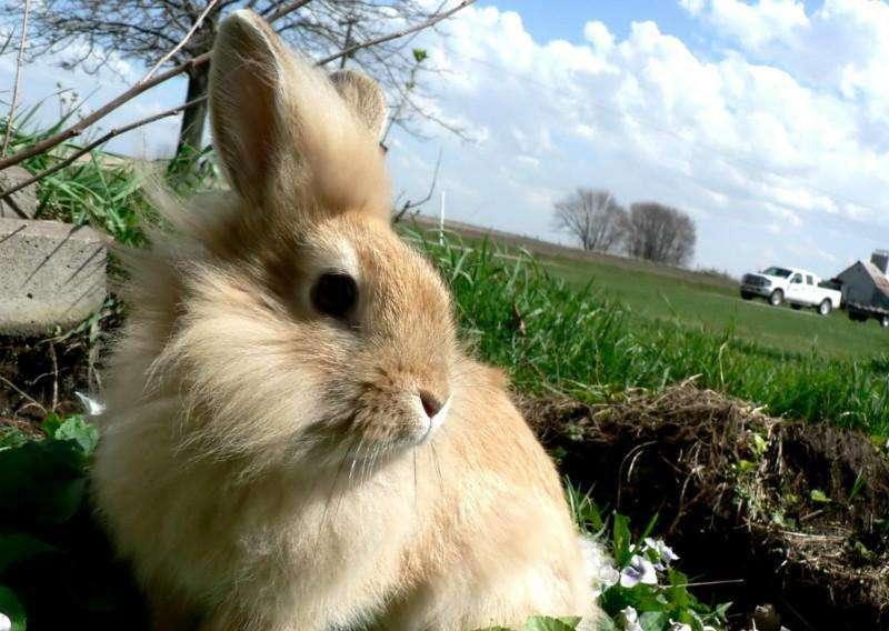 獭兔怎么养 獭兔好养吗