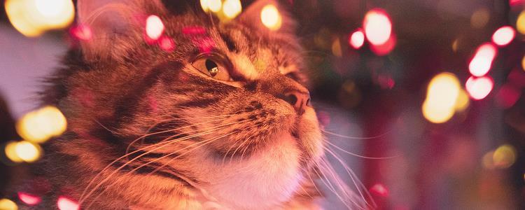 猫咪涨奶怎么办特别硬