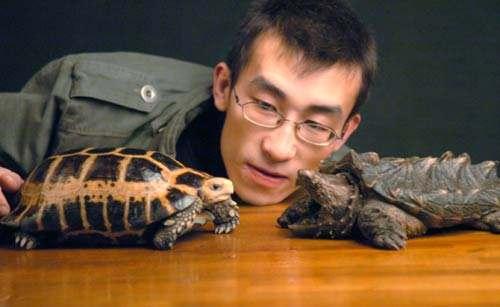 赫曼陆龟智商有多高