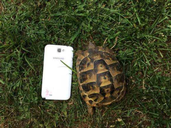 赫曼陆龟什么品相最好 赫曼陆龟怎么看品相