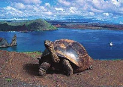 加拉帕戈斯象龟好养吗 加拉帕戈斯象龟怎么养