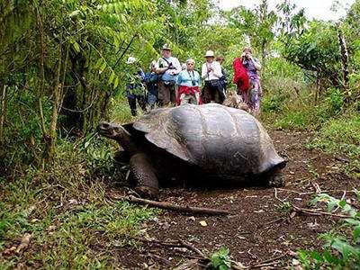 加拉帕戈斯象龟温顺吗