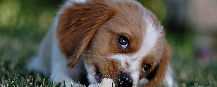 狗发抖是什么原因,不冷