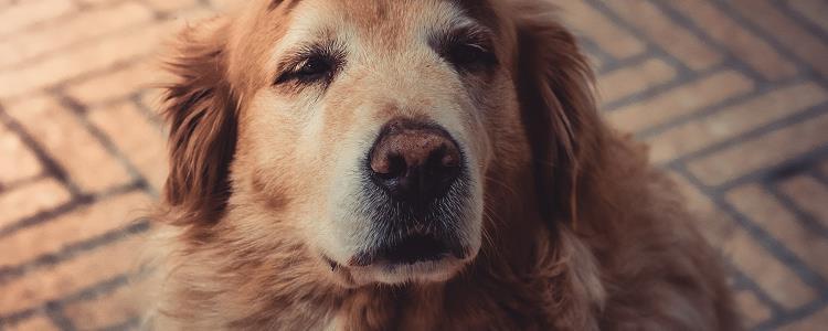 小狗吐了怎么办 可以吃什么药
