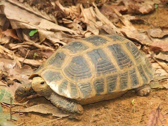 缅甸陆龟亲人吗 缅甸陆龟认识主人吗