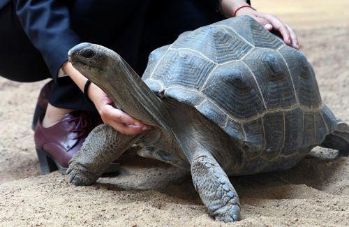 阿根廷象龟和苏卡达的区别