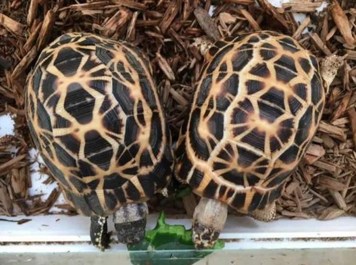蛛网陆龟怎么养