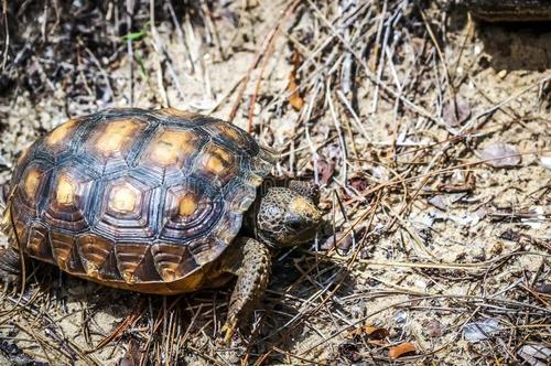 沙漠龟怎么养
