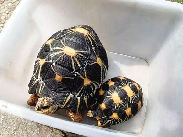 辐射陆龟爱互动吗 辐射陆龟互动性好吗