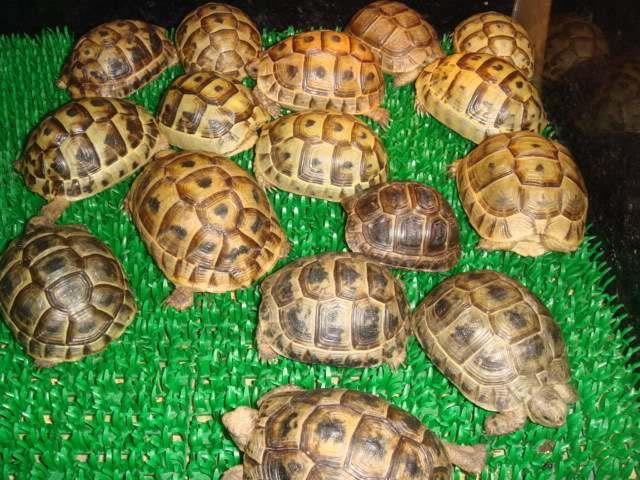 欧洲陆龟怕不怕冷