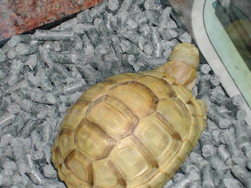 欧洲陆龟好养吗 欧洲陆龟饲养方法