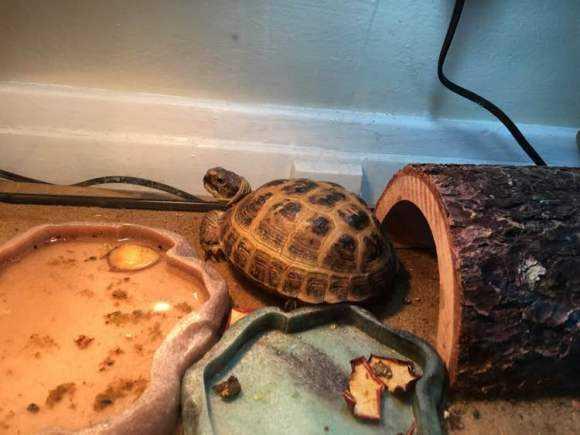 四爪陆龟保护级别 四爪陆龟的保护级别