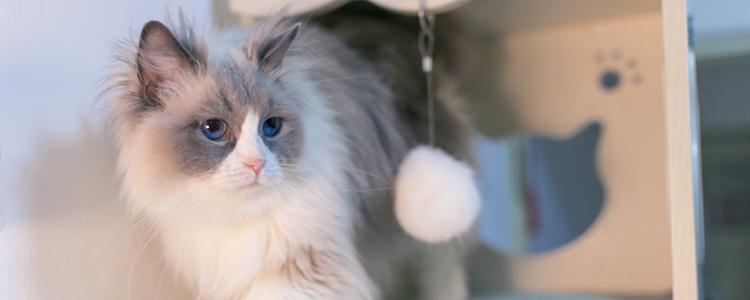 猫亲近人有什么表现