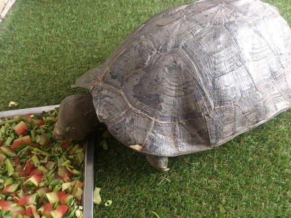 亚洲巨龟需要晒背吗