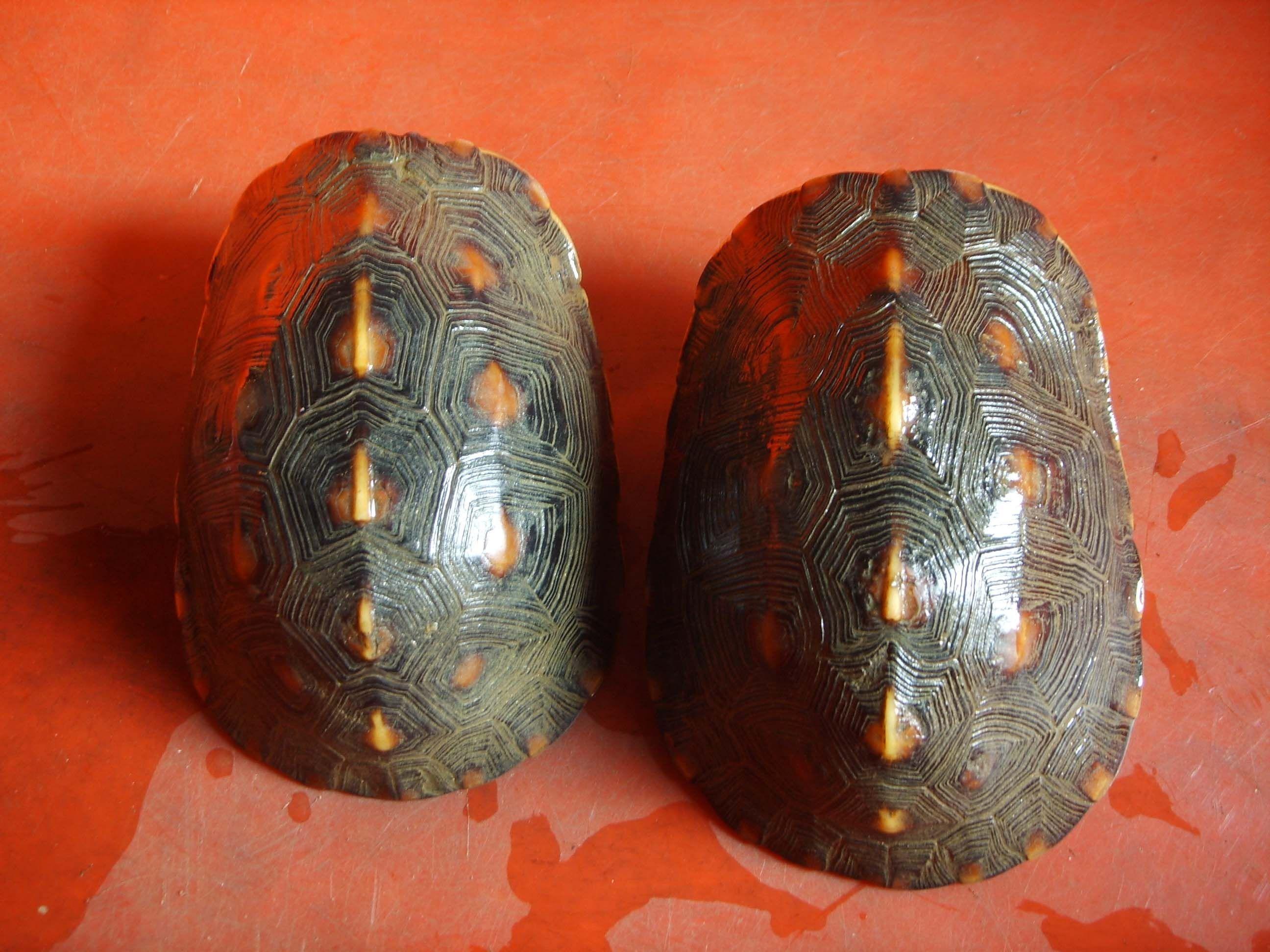 黄缘闭壳龟是保护动物吗