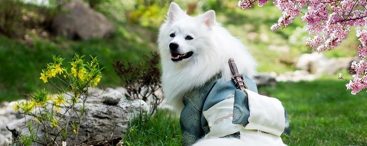 训练狗狗的大小便