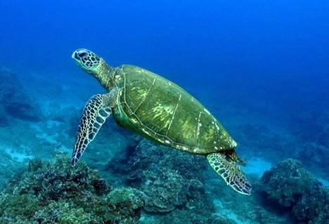 绿海龟突然不吃东西怎么办