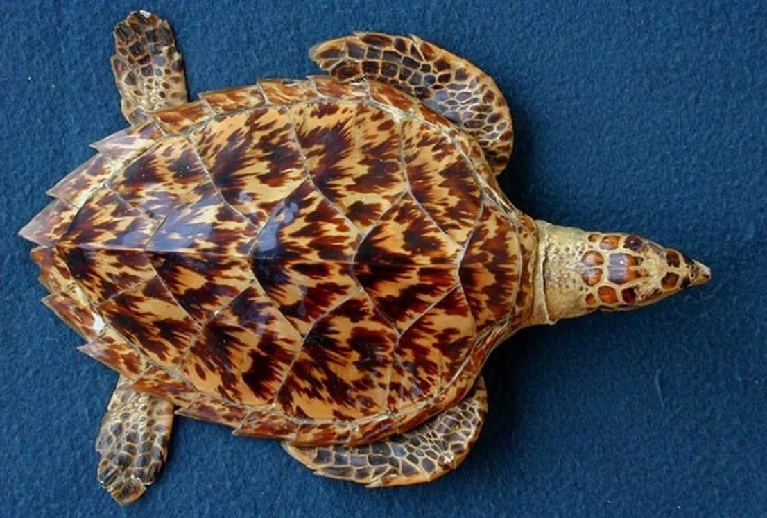 绿海龟和红海龟的区别
