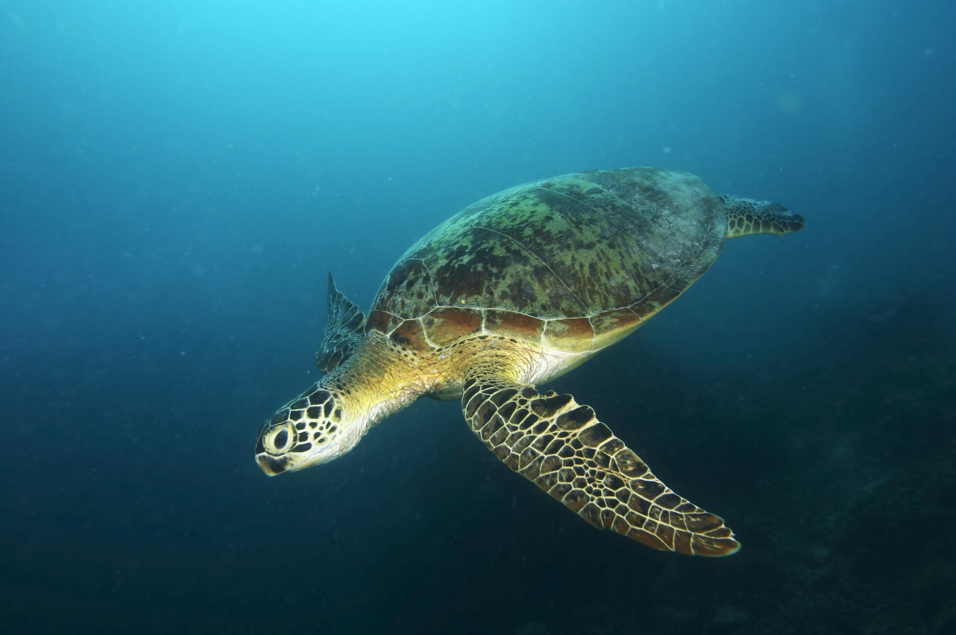 绿海龟吃什么东西