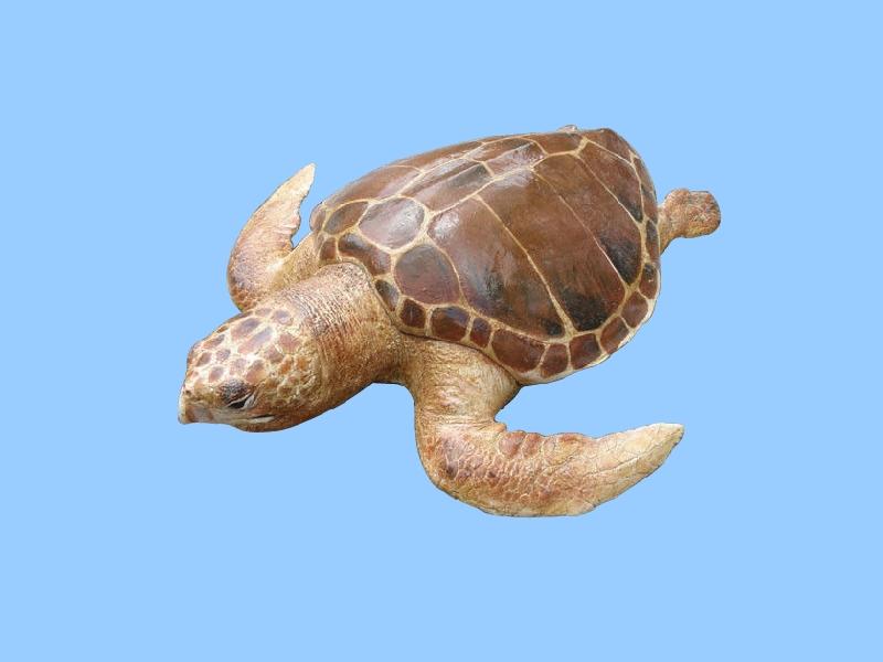 太平洋丽龟价格