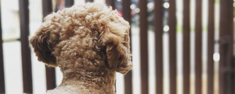 狗狗身上长红疙瘩怎么办