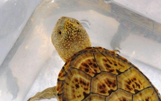 东方泥龟咬人吗