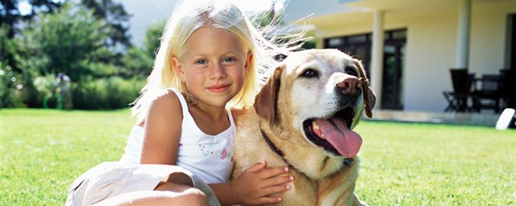 拉布拉多幼犬感冒症状