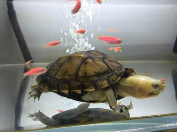 蝎泽蛋龟一般能活多久